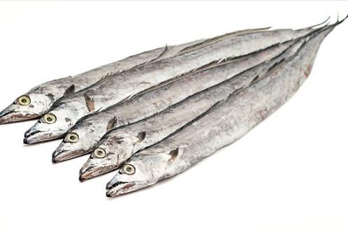 3007 Ribbon Fish 700 UP