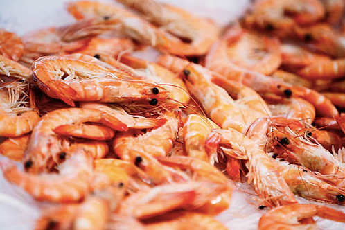 2023 Whole Cooked Prawn 16/20