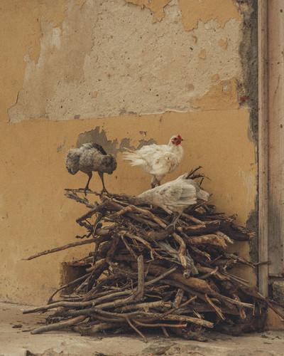 DSC_4349 - 2012-02-12 at 02-04-09-Edit.j