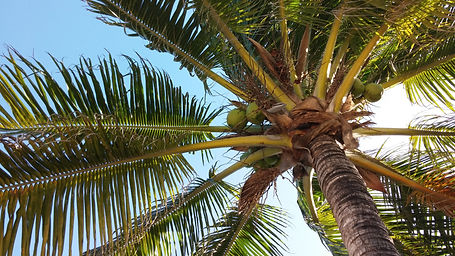 Palm trees, tropical