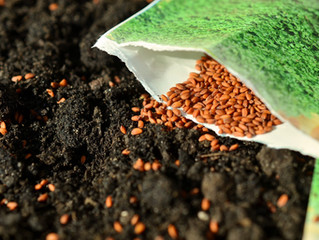 What Seed are You Sowing?