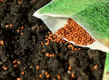 What kind of seeds are you sowing?