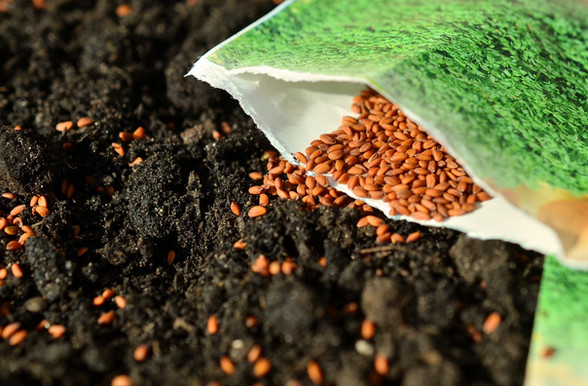 Seed Parables