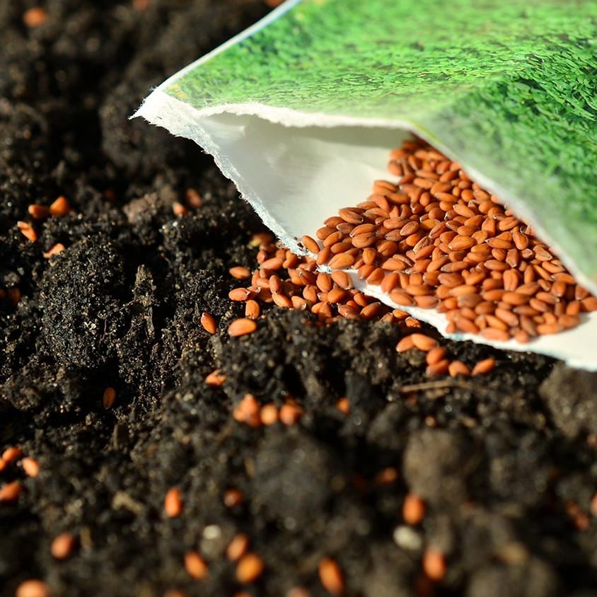 Starting Seeds for Summer Gardens