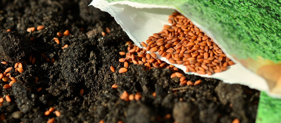 Why bother saving SEEDS?