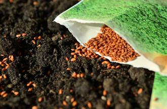 Entrega de semillas