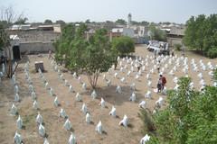 منظمة منى توزع 300 سلة غذائية على نازحي مديرية الدريهمي في الحديدة