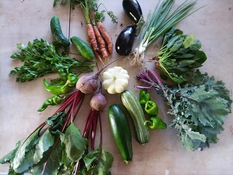 August 15 Harvest Box!