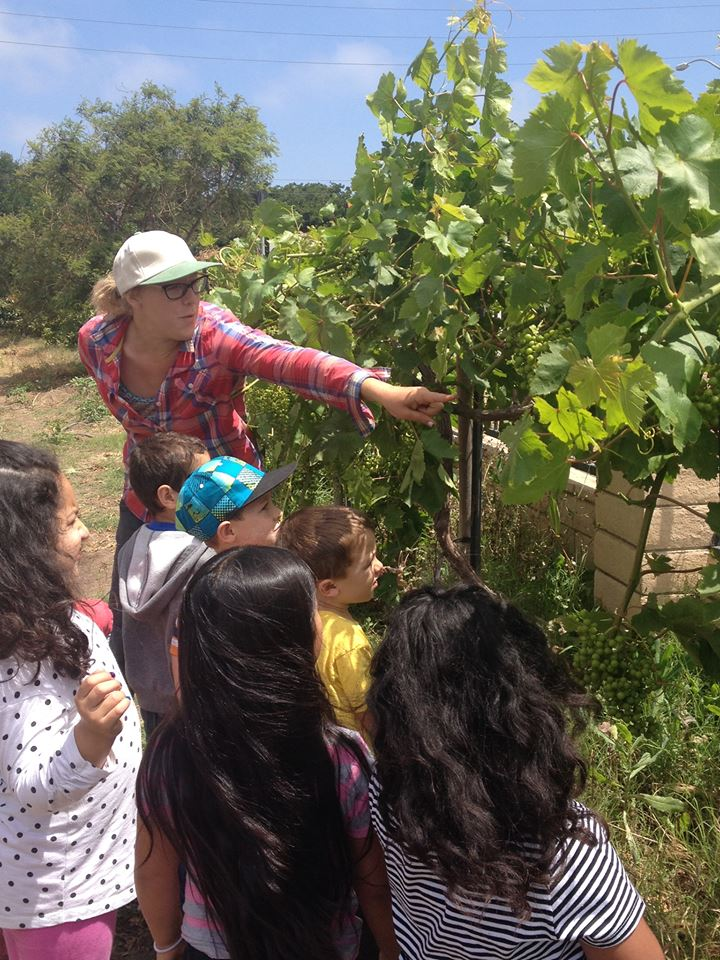 kids and grapes