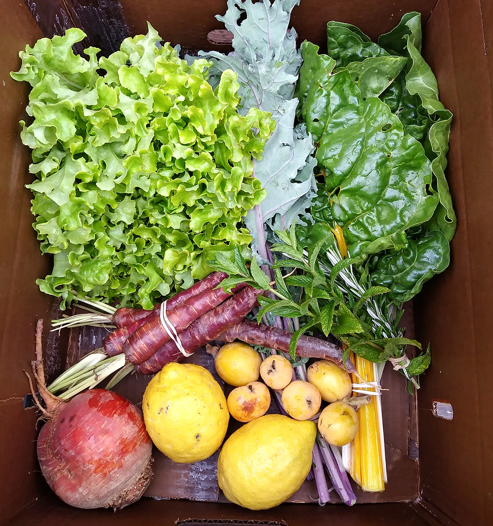 Greens, herbs, fruits and roots