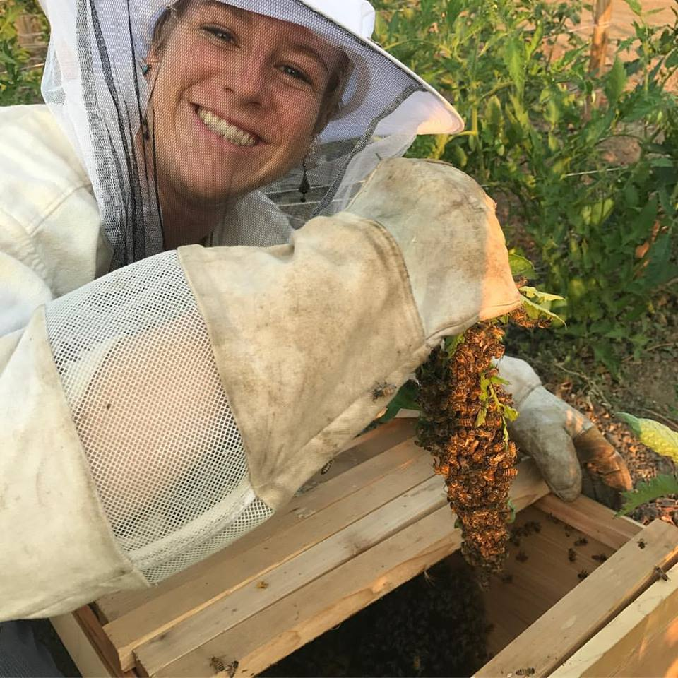 Angie in a bee suit placing a bee swarm into a nucleus box.