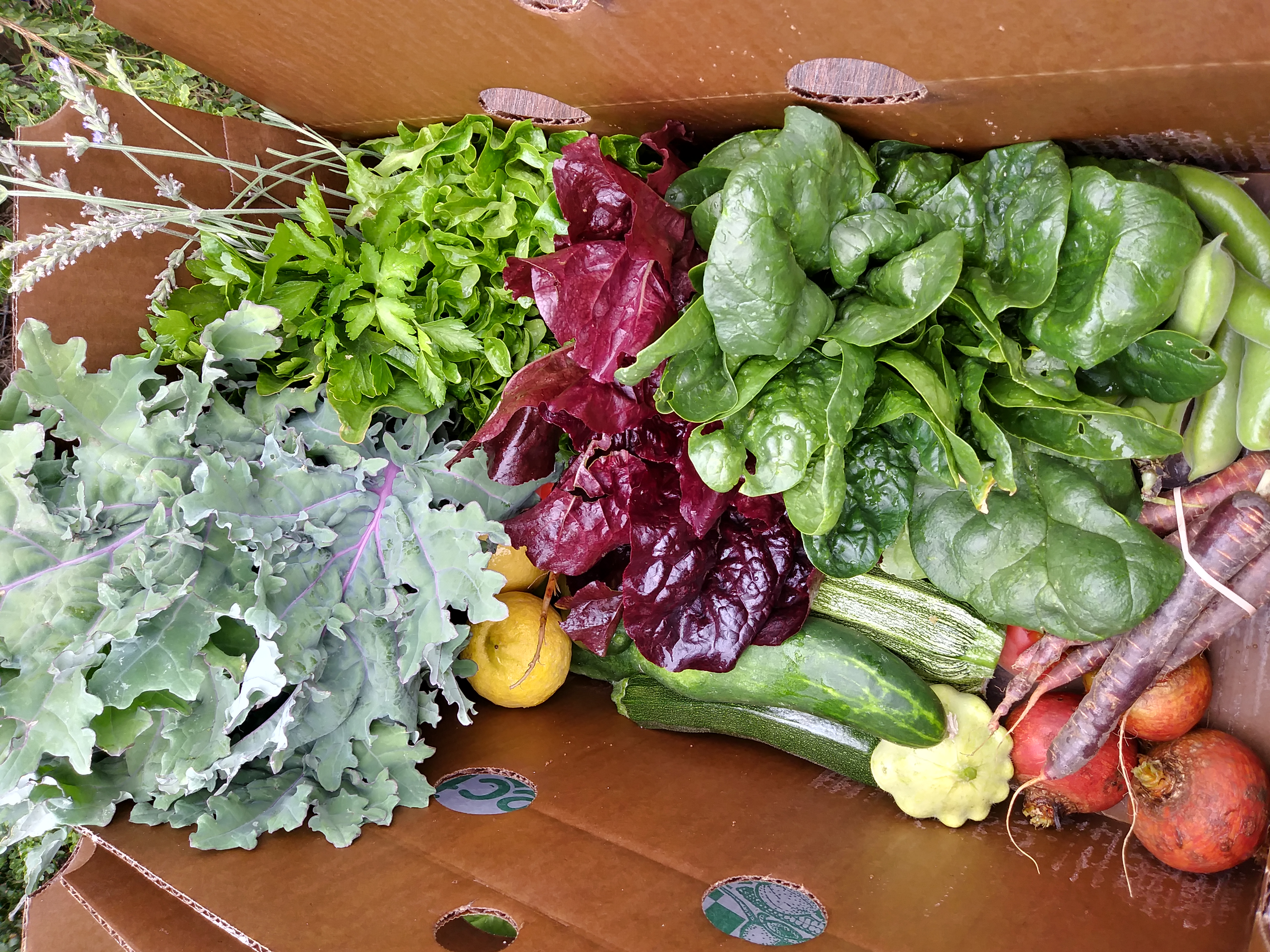An overflowing box of fresh produce for CSA subscribers.