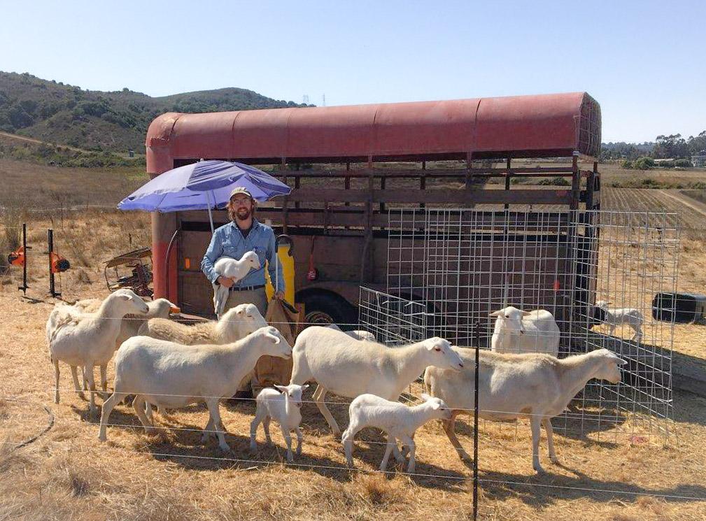 Robert posing with his sheep flock.