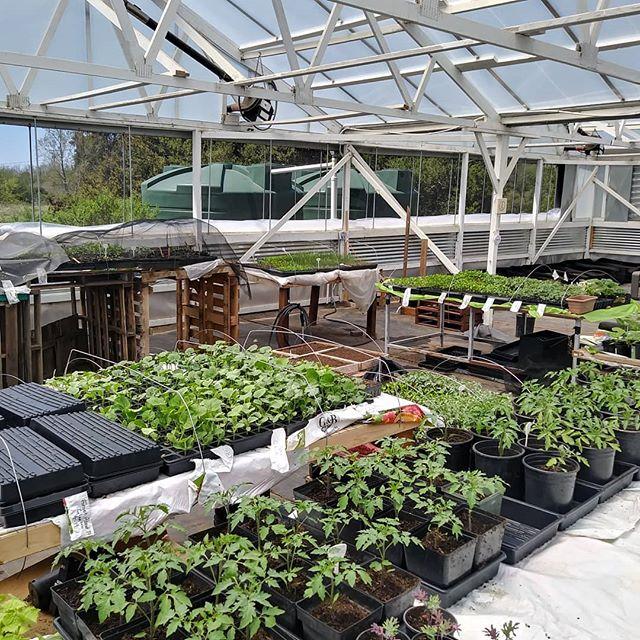Greenhouse seedling propagation area