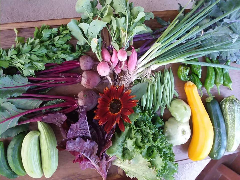 A late summer box of fresh produce for CSA subscribers.