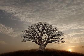 barren-tree-1.jpg