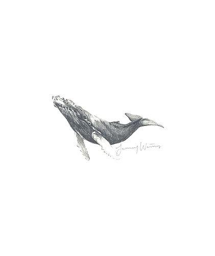 JanuaryWaters_Whale.jpg