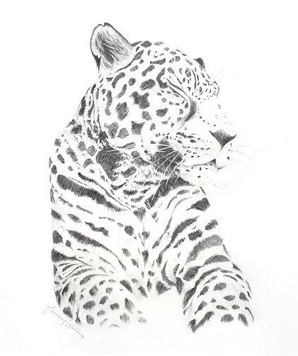 JanuaryWaters_Leopard.jpg