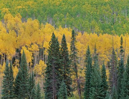 Central Colorado Autumn