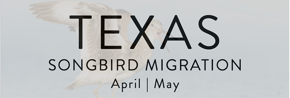 Songbird Migration | Texas | May 1-4, 2022 | $5500
