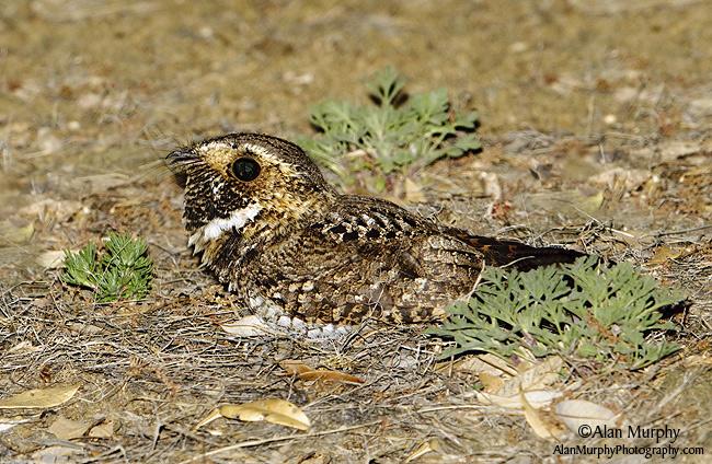 2 |  Cochise Co | AZ | May
