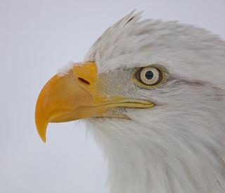 Eagle Eye, Alaska