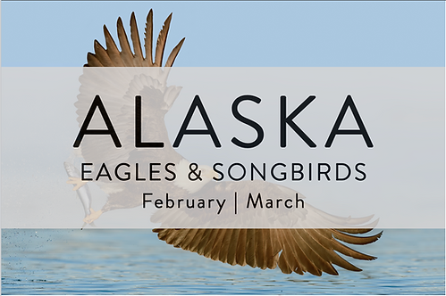 Eagles & Songbirds | Alaska