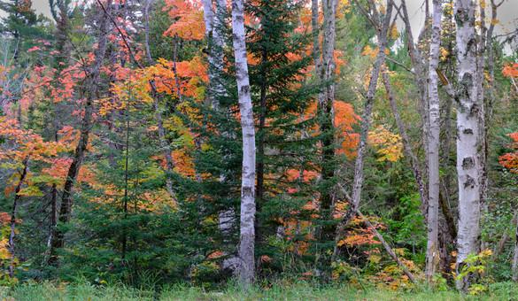 Keeweenaw Autumn Scene, Michigan