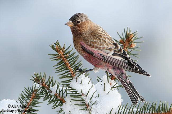 7 | Taos Co | NM | Dec