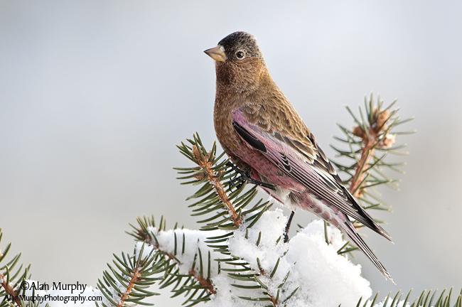 13 | Taos Co | NM | Dec