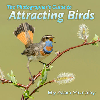 (a) Photographer's Guide to Attracting Birds