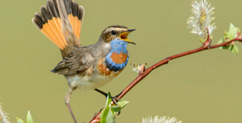 Photographer's Guide to Attracting Birds