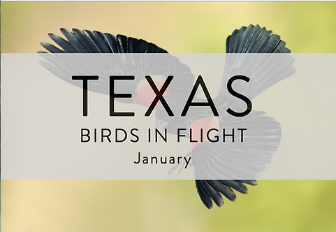 Birds In Flight | Texas