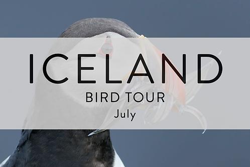 Iceland Bird Tour | Europe