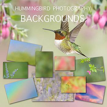 (a) Hummingbird EBook