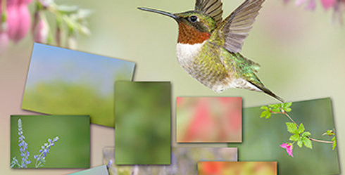 Hummingbird EBook