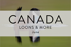 LOONS & MORE