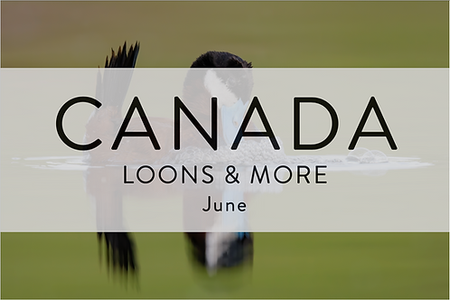 Loons & More | British Columbia