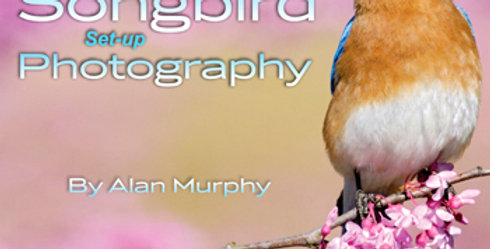 (a) The Guide to Songbird Setup Photography