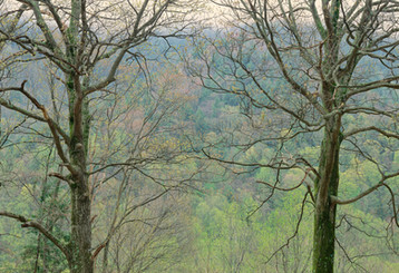 Two Oaks in the Smokies, Tennessee