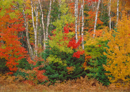 Upper Peninsula Autumn Spectrum: Michigan