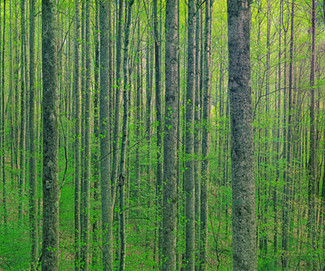 Tulip Poplar Forest, North Carolina