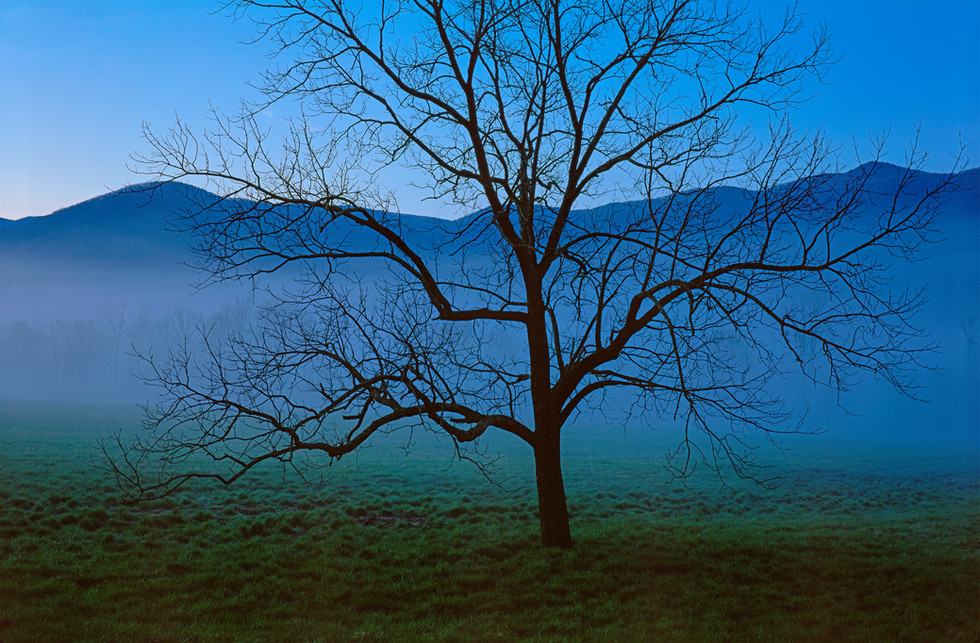 Tree Silhouette on a Quiet Morning, Tennessee
