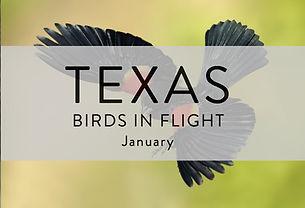 Birds in Flight edited