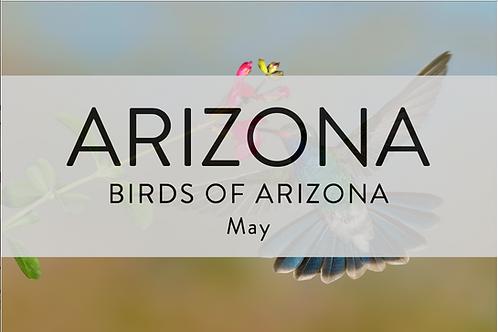 Birds of Arizona   Arizona