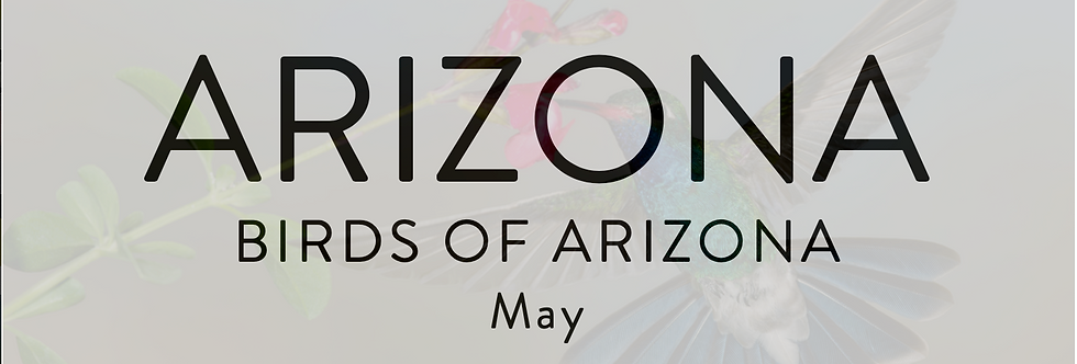 Birds of Arizona | May 14-17, 2023 | $5400
