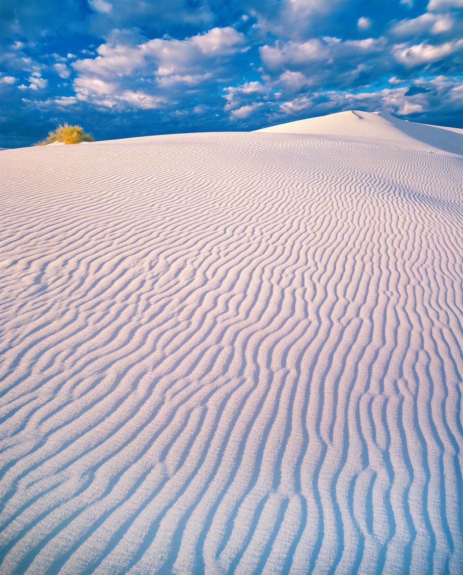 White Sands & Golden Bush, New Mexico