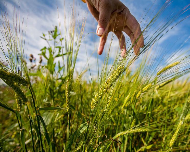 HPE продвигает глобальную продовольственную систему на основе CGIAR