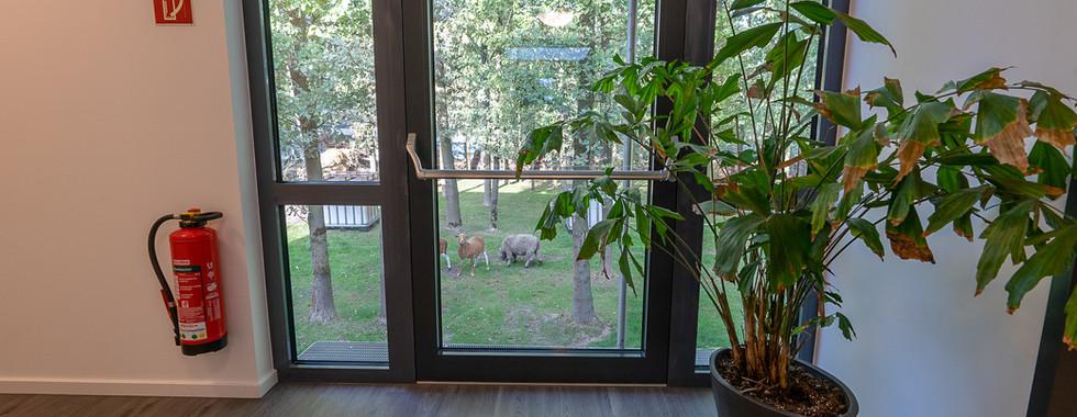 Ausblick in den Wald mit Tieren