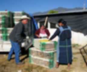 Best Egg-Laying Hens in Cajola is a business based in Guatemala that is run by female entrepreneurs.